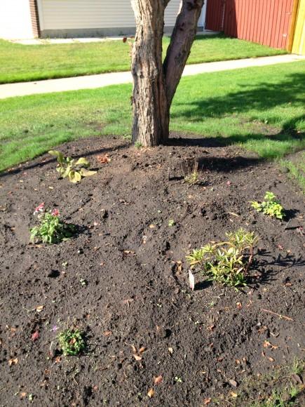 Late_Summer_Gardening.jpg