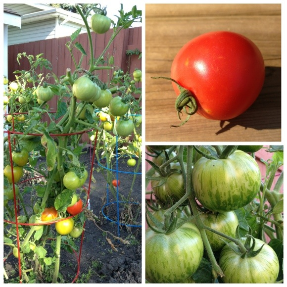 tomatoes_fall_gardening_tips.jpg