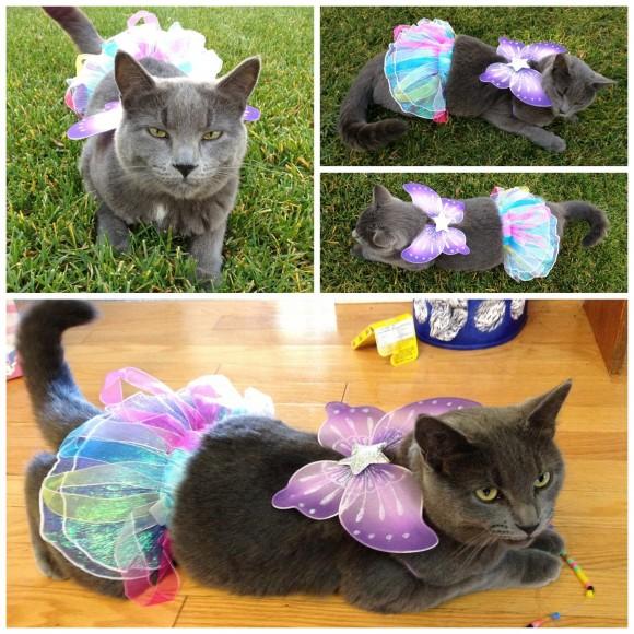 Cat Halloween Costume.jpg