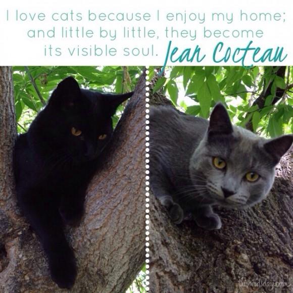 Cat-cats-black-grey-quote.jpg